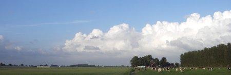 Koeien onder Hollandse luchten