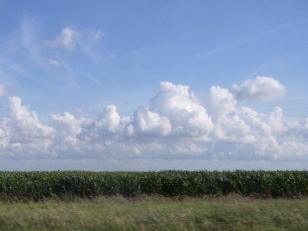 Maisveld tussen Delft en De Lier
