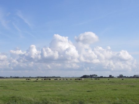 Ouderwets weiland tussen Delft en De Lier