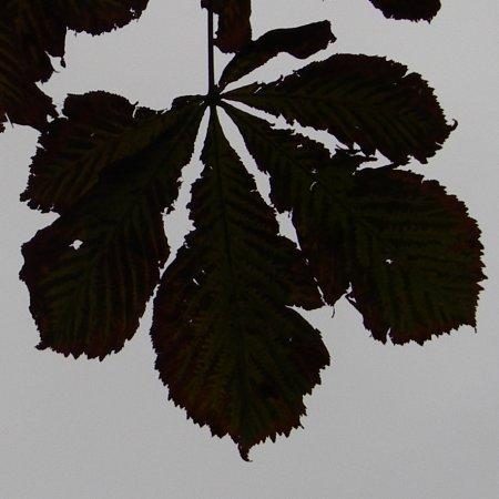Kastanjeblad in de herfst