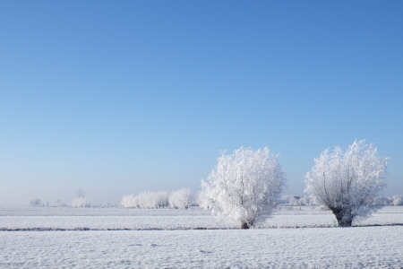 Wit winterlandschap